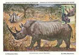 D32054 CARTE MAXIMUM CARD  FD 2013 NETHERLANDS - WHITE RHINO CP MUSEUM ORIGINAL - Rhinozerosse