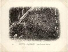Campagne DUGUAY-TROUIN 1902-1903 - Expédition - Canaux De Patagonie - Détroit De Magellan - Baie Fortescue - CHILI - Chili