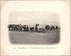 Campagne DUGUAY-TROUIN 1902-1903 - Expédition - ARGENTINE - Puerto Belgrano - Choix Des Boeufs - Argentine