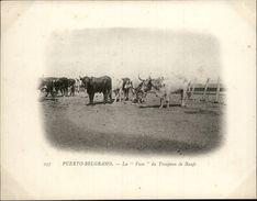 Campagne DUGUAY-TROUIN 1902-1903 - Expédition - ARGENTINE - Puerto Belgrano - La Vaca - Boeufs - Argentine