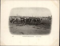 Campagne DUGUAY-TROUIN 1902-1903 - Expédition - ARGENTINE - Puerto Belgrano - Corral - Boeufs - Argentine