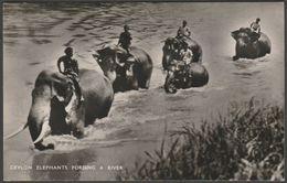 Elephants Fording A River, Ceylon, 1937 - Plâté RP Postcard - Sri Lanka (Ceylon)