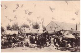 ANGERS - Lacher De Pigeons - Angers
