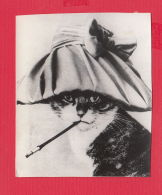 220861 / Real Photo - ANIMAL  Cat Chats Katzen HAT Cigarette - Photographs