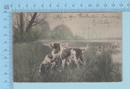 PC Chien De Chasse - Cover Lyon 1903 Rhone + Stamp, Timbre - Hunde