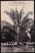 CONGO FRANCAIS - MISSION CATH. DE BRAZZAVILLE - Palmier à L'huile -- Au Dos Timbre MOLS - Tampon Banana Bleu Vers Gand ! - Congo Français - Autres