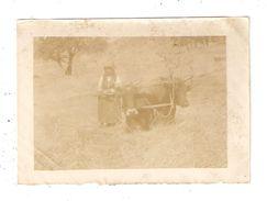 Photo Originale Agriculture Attelage  Grèce Macédoine : Battage Du Grain Femme Attelage De Boeufs Dans Un Champ 1918 - Cultures