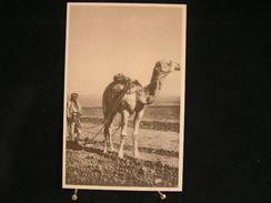 A-157 /Asie - Palestine,  Retour à La Terre En Palestine / Auxiliaire Laïques Des Missions-Bruxelles . - Palestine