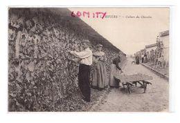 77 Thomery La Riviere Culture Du Chasselas Cpa Animée Vin Vigne Raisin Cepage Doré De Fontainebleau Cachet 1929 - Autres Communes