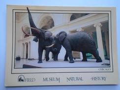 D156071 Field Museum Of Natural History  Chicago Illinois -  Fighting African Elephants -Elephant - Elefanten