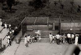 Photo Originale Zoo - L'enclos Des Ours Polaires, Ours Blancs, Eisbär & Visiteurs - Animaux Polaires En 1969 - Personnes Anonymes