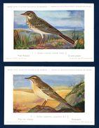 Oiseaux De La Faune Belge. Musée Royal D'Histoire Naturelle De Belgique. Lot De 200 Cartes De N°. 1 à N°. 200 - Pájaros