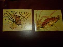 A305  2 Cartoline Pesci - Pesci E Crostacei