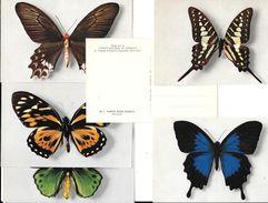PAPILLONS - 6 Cartes Différentes éditées Par Le COMITE NATIONAL DE L'ENFANCE à PARIS -  EDIT Draeger - Vlinders
