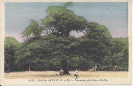 CPSM France 77 Seine Et Marne - Forêt De Sénart – Carrefour Du Chêne D'Antin - Ohne Zuordnung