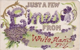 New York White Plains Just A Few Lines 1910