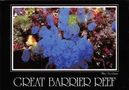 CPM - GREAT BARRIER REEF - Blue Ascidians Displaying Their Delicate Beauty. - Great Barrier Reef