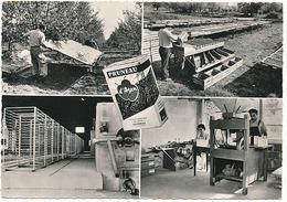 BOURRAN - SOCIETE AGRICOLE LAFON - OSCAR DE L'EMBALLAGE  (CPSM) - Autres Communes