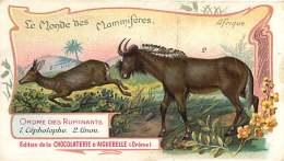 191217 CHROMO CHOCOLAT AIGUEBELLE Drôme - Monde Mammifères - Ordre Des Ruminants -  AFRIQUE Céphalophe Gnou - Aiguebelle
