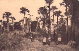 Afrique >   Haute-Volta (BURKINA FASO)  Forêt De Rôniers (palmiers) *PRIX FIXE - Burkina Faso