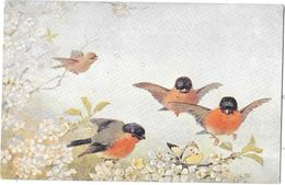 "R. TUCK ""OILETTE"" N° 3269 STUDIES OF BIRDS - ETUDES D'OISEAUX - - Tuck, Raphael"