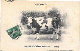 CONCOURS GENERAL AGRICOLE - PARIS  1913 -  VACHE DE RACE FEMELINE - Circulé De PARIS à N.D. De COURSON (calvados) - Expositions