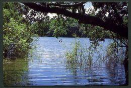 Nicaragua. Isla De Ometepe. *Pesca Artesanal En El Lago* Nueva. - Nicaragua