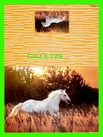 CHEVAUX - HORSES -  CHEVAL BLANC AU GALOP - CARTE DOUBLE - - Chevaux