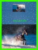 CHEVAUX - HORSES -  CHEVAL  NOIR AU GALOP  DANS LE LAC - CARTE DOUBLE - - Chevaux