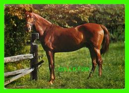 CHEVAUX - HORSES -  POURQUOI VOUS ME REGARDER ? - Chevaux