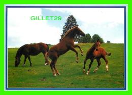 CHEVAUX - HORSES - ON DANCE ! - CIRCULÉE EN 2006 - PHOTOGLOB ZURICH - - Chevaux
