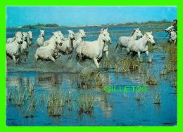 CHEVAUX - HORSES - EN CAMARGUE AVEC LES GARDIANS - ÉCRITE - AZURCOLOR EDITIONS - - Chevaux