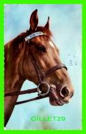 CHEVAUX - HORSES - JE CHERCHE UNE AMIE ! -  CIRCULÉE EN 1965 - - Chevaux