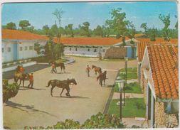 Cuba : Vue : Cheval - Ansichtskarten