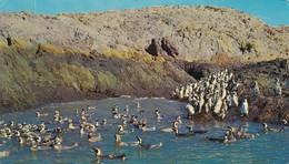 CAMARONES, CHUBUT, PINGUINERA. EDICIONES FOTO LIZ COLOR. ARGENTINE -BLEUP - Argentine