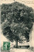 ARBRE(SOUCY) TILLEUL - Trees