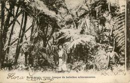 ARBRE(ARGENTINE) - Trees