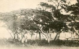ARBRE(TAIREN) - Trees