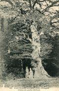 ARBRE(FONTENOY LE CHATEAU) CHENE - Trees