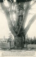 ARBRE(MONTIGNY LENCOUP) CEDRE - Trees