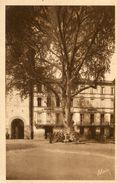ARBRE(RIVESALTES) PLATANE - Trees