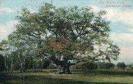 ARBRE(THE MAJOR OAK) SHERWOOD - Trees