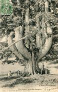 ARBRE(SAINT CERGUES) COGAN - Trees