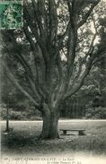 ARBRE(SAINT GERMAIN EN LAYE) CHENE - Trees