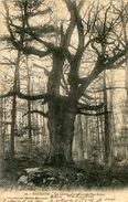 ARBRE(BARBIZON) CHENE - Trees
