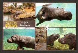 ZooParc De Beauval - Hippopotames - 41 Loir-et-Cher - Hippopotames