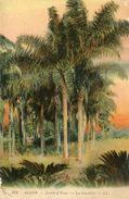 ARBRE(ALGER) COCOTIER - Trees