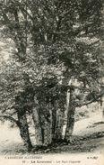 ARBRE(LA LOUVESC) - Trees