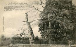 ARBRE(RENNES) CHENE - Trees