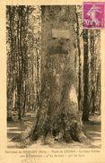 ARBRE(MORGNY) CHENE(LYONS) - Trees